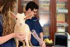 Agriculture and Veterinary Medicine
